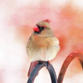 Trina Ansel - Pretty Cardinal