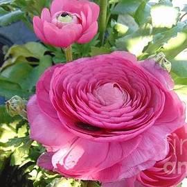 Charlotte Gray - Pretty in Pink