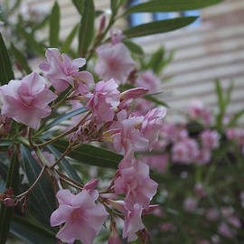 Donato Iannuzzi - Pretty In Pink