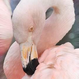 Kathy Baccari - Pretty In Pink