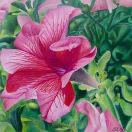 Pamela Clements - Pretty in Pink