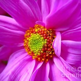 Turtle Shoaf - Pretty in Pink