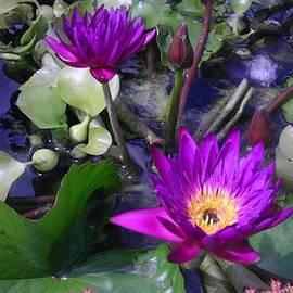 Charlotte Gray - Pretty in Purple