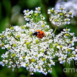 Mariola Bitner - Pretty Little Ladybug