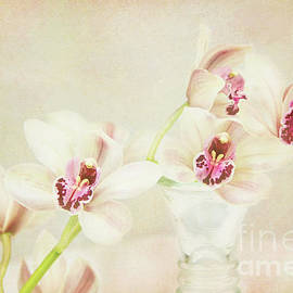 Kim Andelkovic - Pretty Orchids