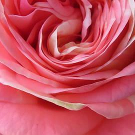 Ana Dawani - Pretty Pink