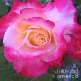 Wonju Hulse - Pretty pink rose