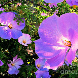 Michaline  Bak - Pretty Purple Flowers of Arizona