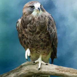 Johanne Dauphinais - Prey bird