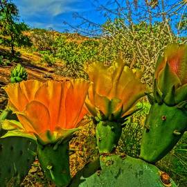 Dennis Nelson - Prickly Pear