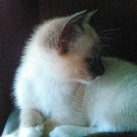 Becky Burt - Siamese Kitten Profile