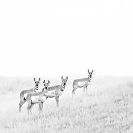 Jennie Marie Schell - Pronghorn Antelopes on the Prairie Monochrome