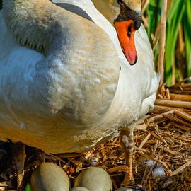Brian Stevens - Proud Mom Swan