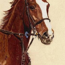 Patricia Barmatz - Proud - Portrait of a Thoroughbred Horse