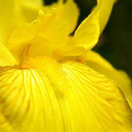Alexandra Lavizzari - Proud To Be Yellow