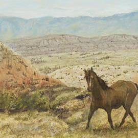 Sharon Karlson - Pryor Mountain Wild Mustang
