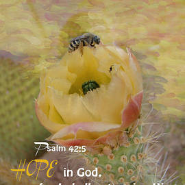 Beverly Guilliams - Psalm 42 5 HOPE