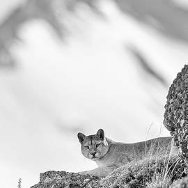 Max Waugh - Puma Peak