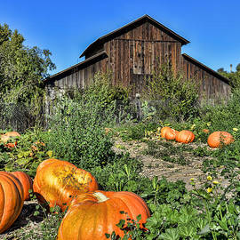 Keith Ducker - Pumpkin Barn