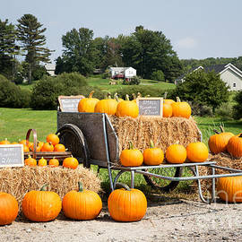 Pumpkin sale - Jane Rix