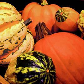 Sandi OReilly - Pumpkins And Gourds