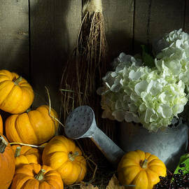 Ann Garrett - Pumpkins and White Hydrangea 2
