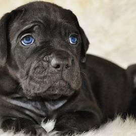 Sergey Lukashin - Puppy Odry