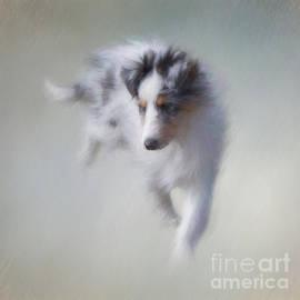Ann Garrett - Puppy Power