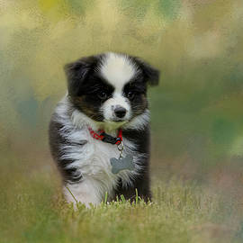 Jai Johnson - Puppyhood 1