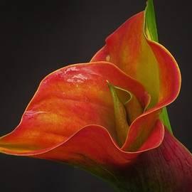 B Vesseur - Pure Beauty