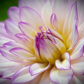 Wendy Yee - Purple And Yellow Spring