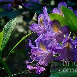 Elmar Langle - Purple Bloom