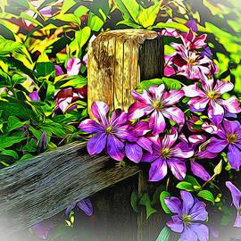 Dennis Lundell - Purple Clematis on Split Rail Fence