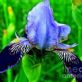 Marsha Heiken - Purple Coated Iris