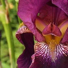 Bruce Bley - Purple Delight