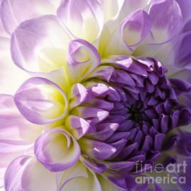 Nick  Boren - Purple Delight