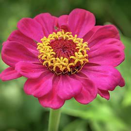Yurii Agibalov - Purple flower on a green background.