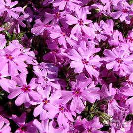 Gardening Perfection - Purple Flower Power