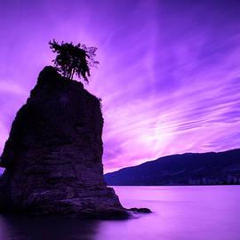 Stephen Stookey - Purple Haze
