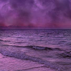 Purple Heart - Betsy C  Knapp