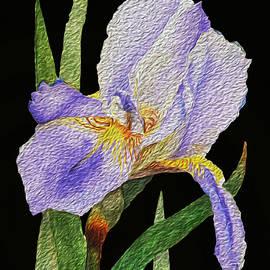 Linda Brody - Purple Iris on Black Background Oil Paint Effect