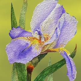 Linda Brody - Purple Iris with Digital Oil Paint Effect on Gold Background