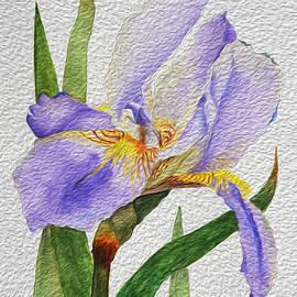 Linda Brody - Purple Iris with Oil Paint Effect