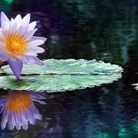 Lori Deiter - Purple Lotus Reflection