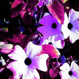 Missy  Brage  - Purple Neon Flowers