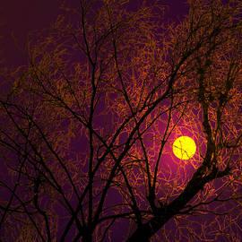 Bliss Of Art - Purple Night Moon