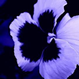 Barbara S Nickerson - Purple Pansy