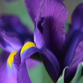 Connie Handscomb - Purple Rainbow
