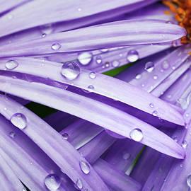 Serhii Kucher - Purple Raindrops Beauty by Serhii Kucher