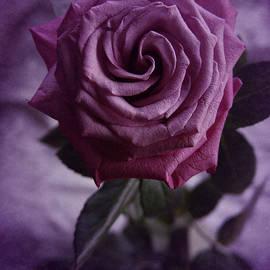 Richard Cummings - Purple Rose of December